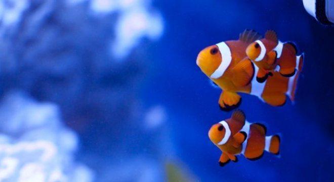 Cuidados esenciales para tener peces como mascotas - Peces para tener en casa ...